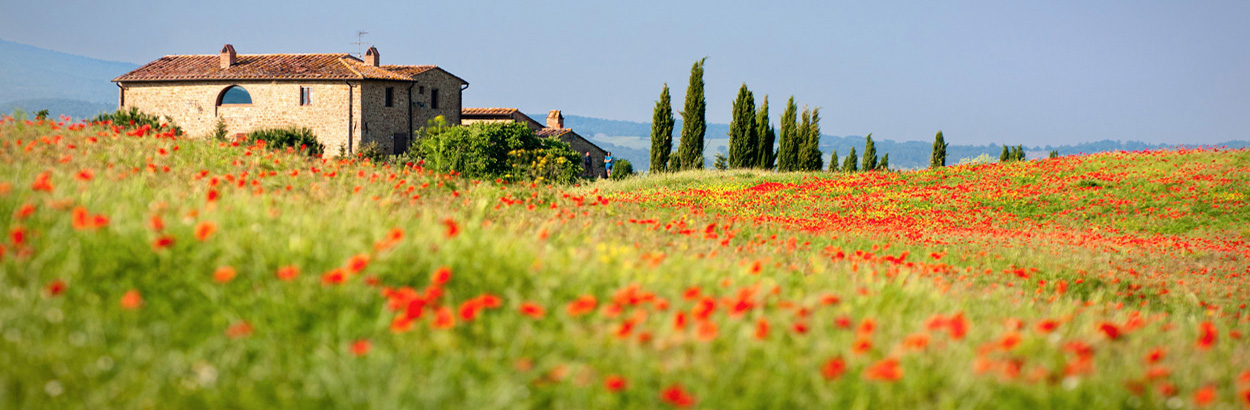 Italy With Pleasure Tours - Poppy Field
